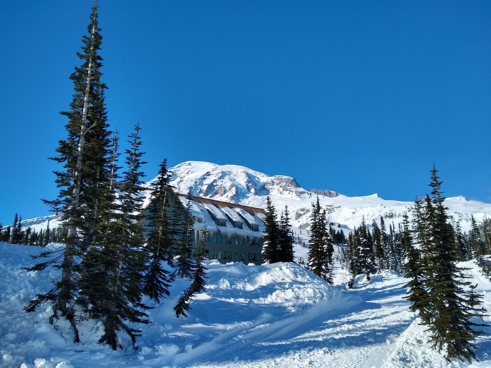Large snow covered mountain with a  historic lodge in the foreground and evergreen trees with deep snow on  a sunny day. Text reads: Spring snowshoeing Mt Rainier