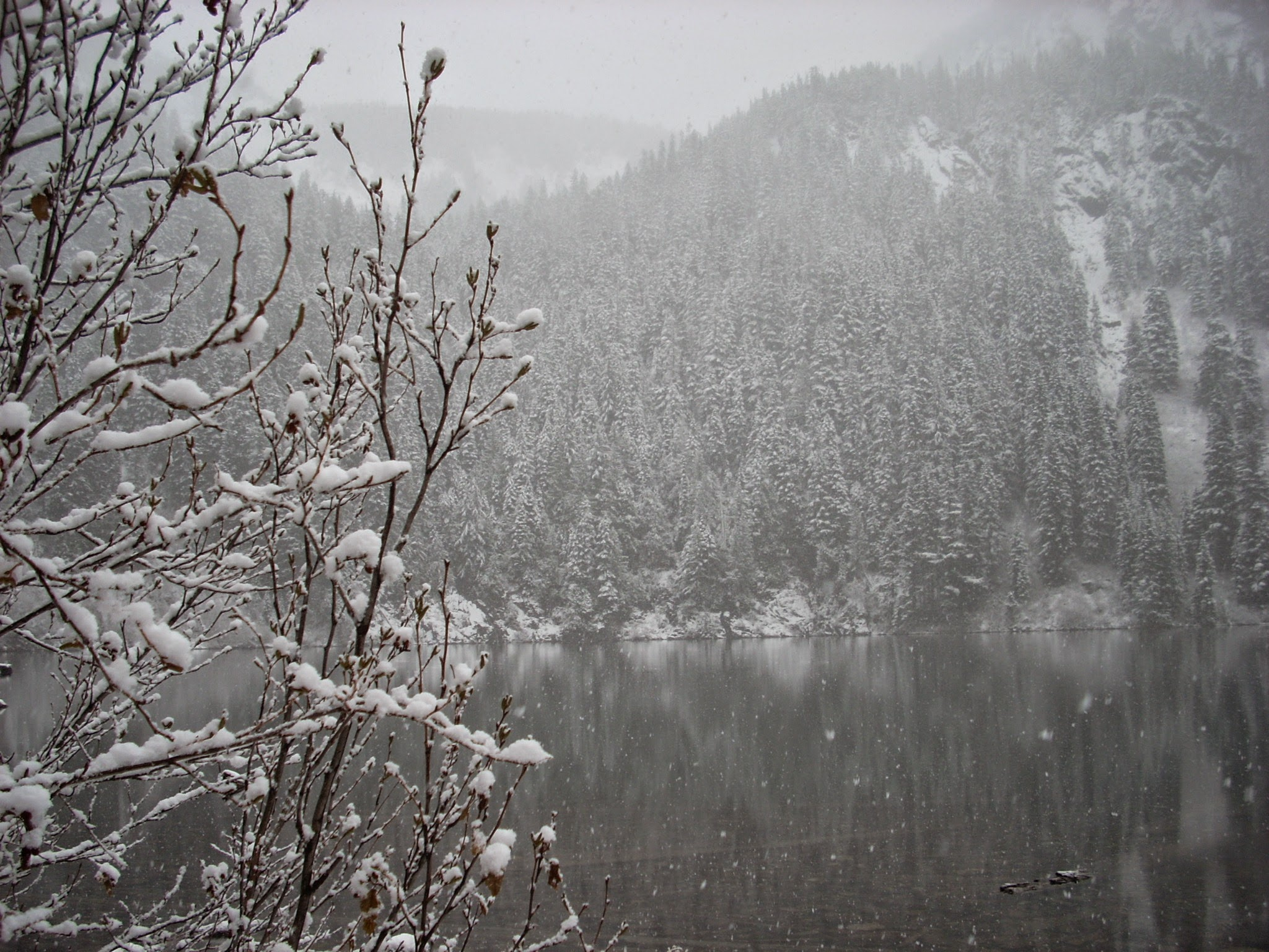 Annette Lake hike in late fall. An alpine lake is surrounded by snow covered evergreen trees and snow is falling on a gray day