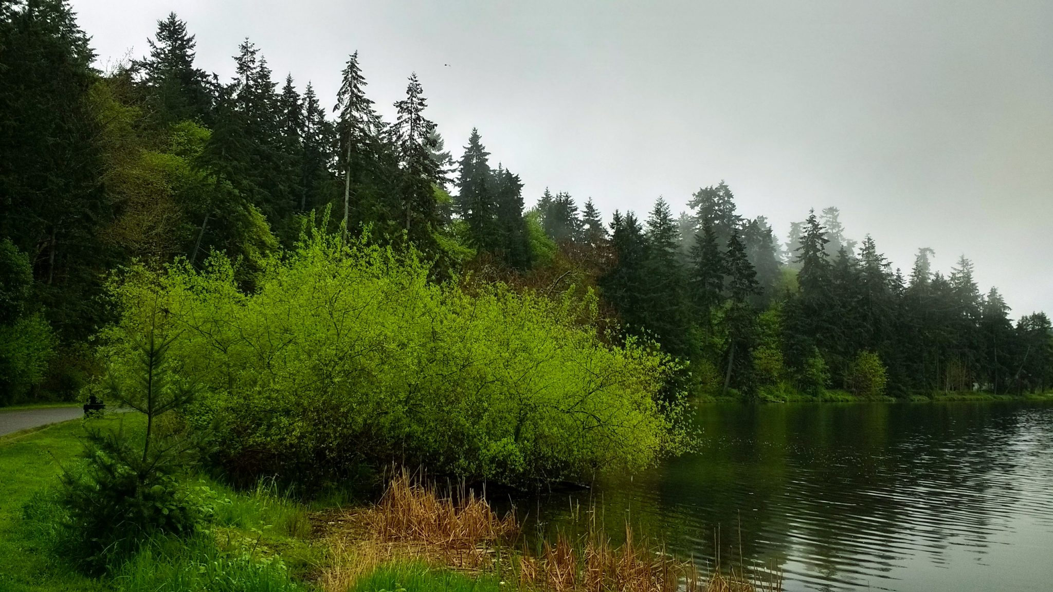 Walking and hiking are excellent outdoor activities in Seattle, including Seward Park. There are evergreen trees and green bushes along a path on a gray foggy day next to a lake