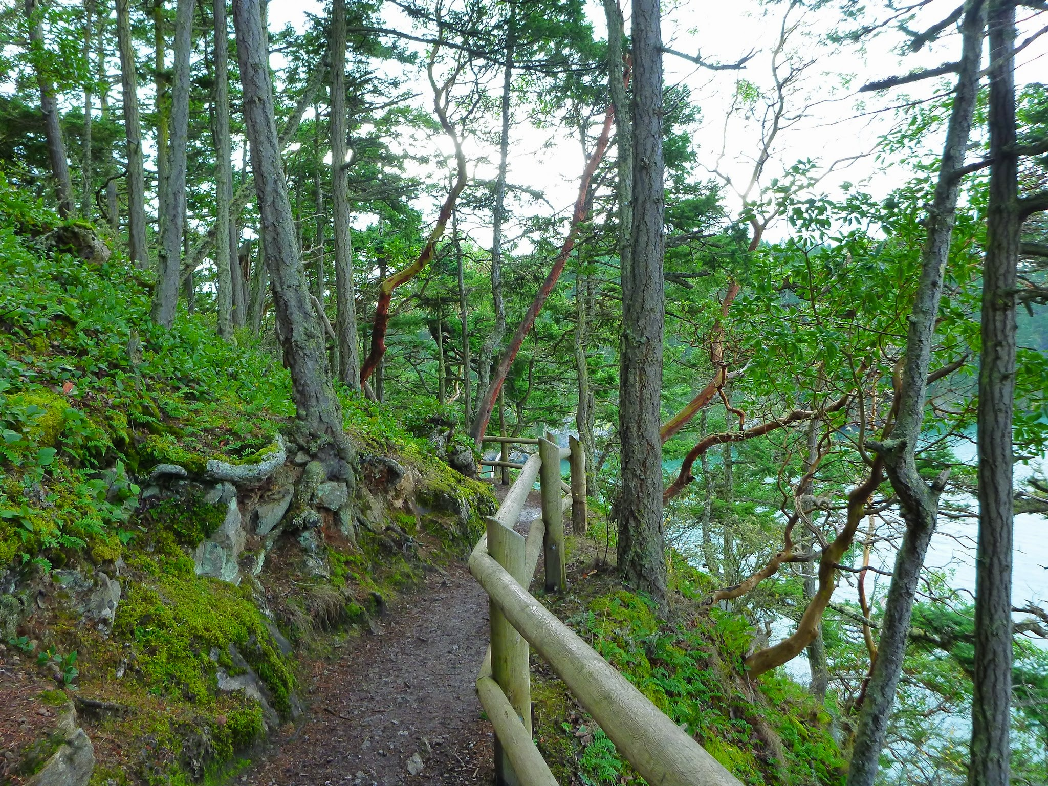 Trees are along the sides of a trail on a bluff. There's a wooden railing and water can be seen through the trees
