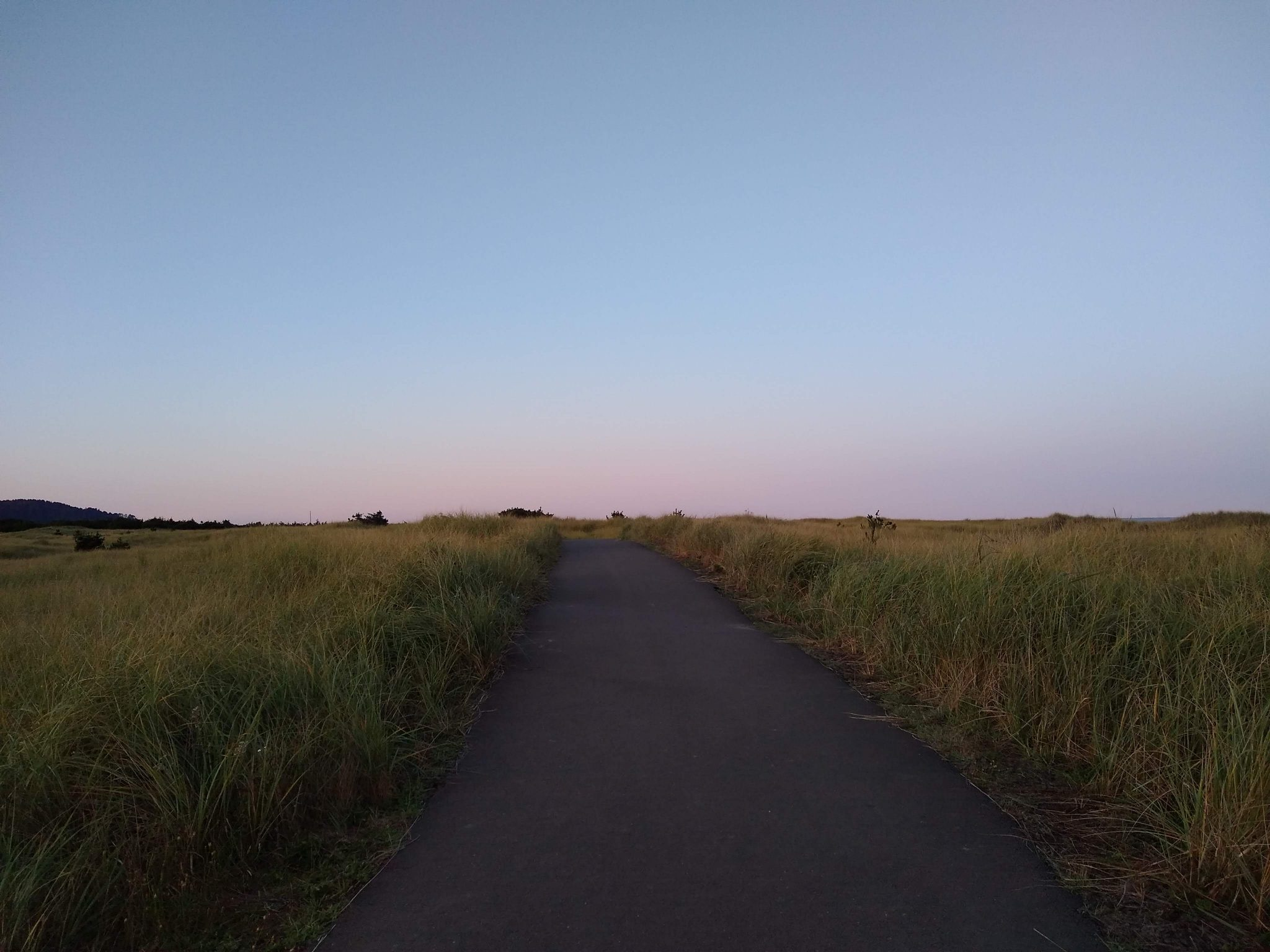 A paved trail in the middle of the photo goes through tall grasses on each side at sunrise