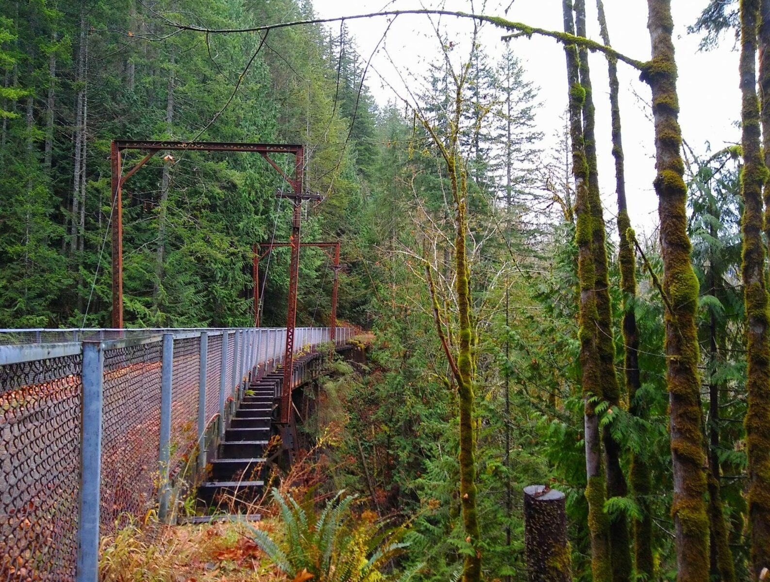 A converted trail bridge to a trail over a steep ravine covered with trees, ferns and moss.