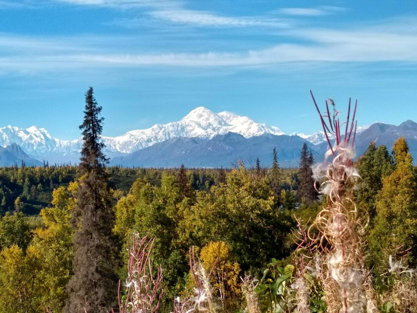 Denali rises above the Susitna river on a sunny day. There are trees in the foreground. The Denali lookout is part of the Alaska itinerary
