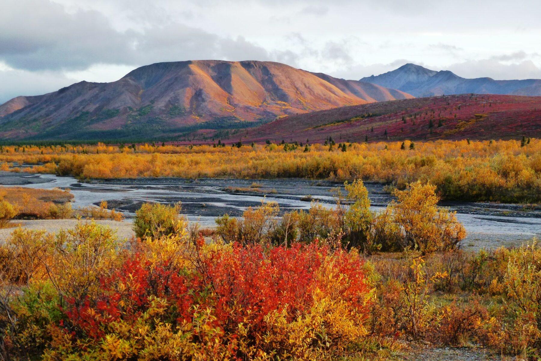 A river at sunset flows through golden and red fall color shrubs with distant mountains in Denali National Park. Denali is a part of an Alaska itinerary