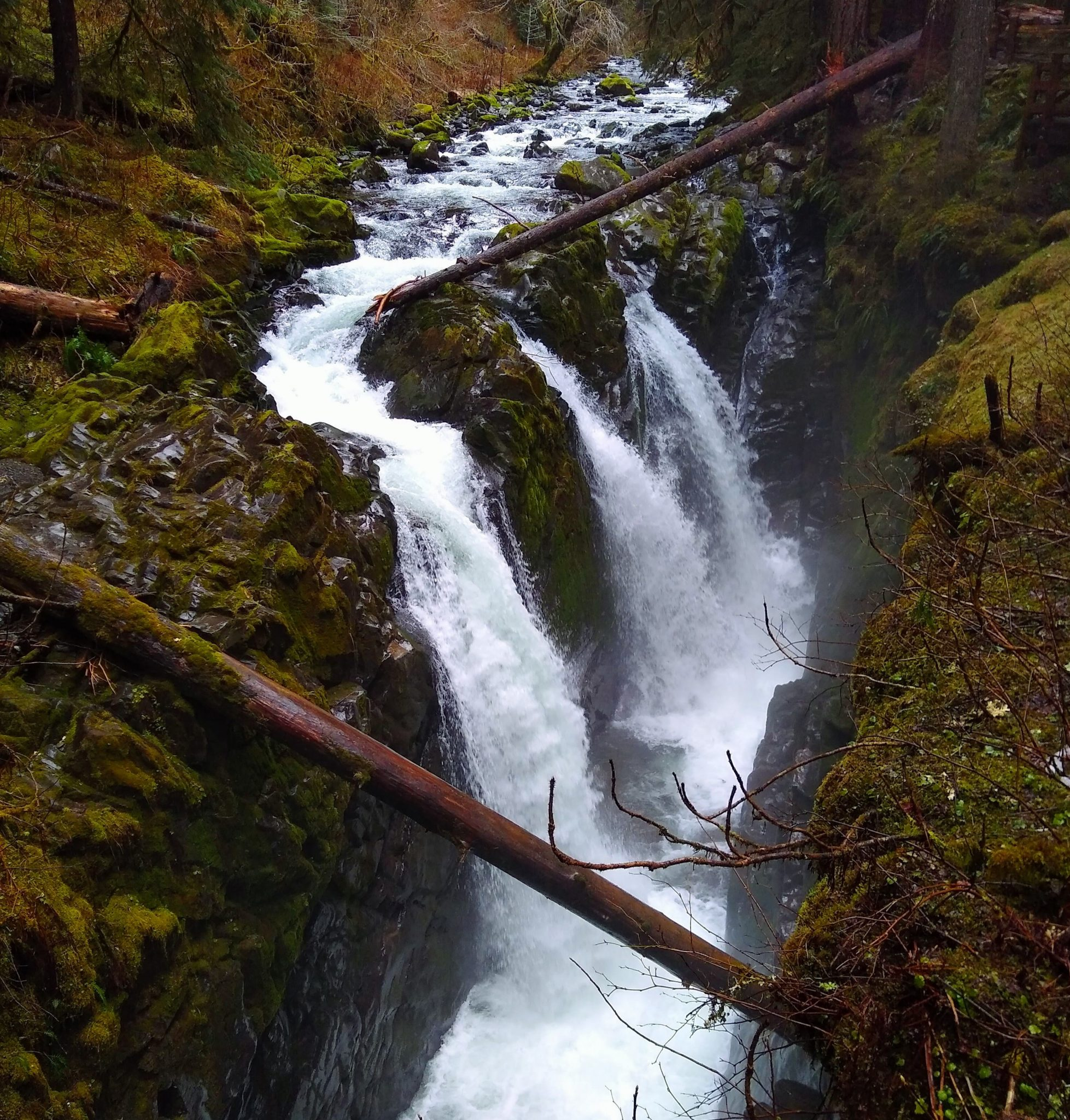 A waterfall with three distinct tiers of waterfall in Olympic National Park. The waterfall is going into a narrow canyon between moss covered rocks. Several large logs lay across the narrow canyon