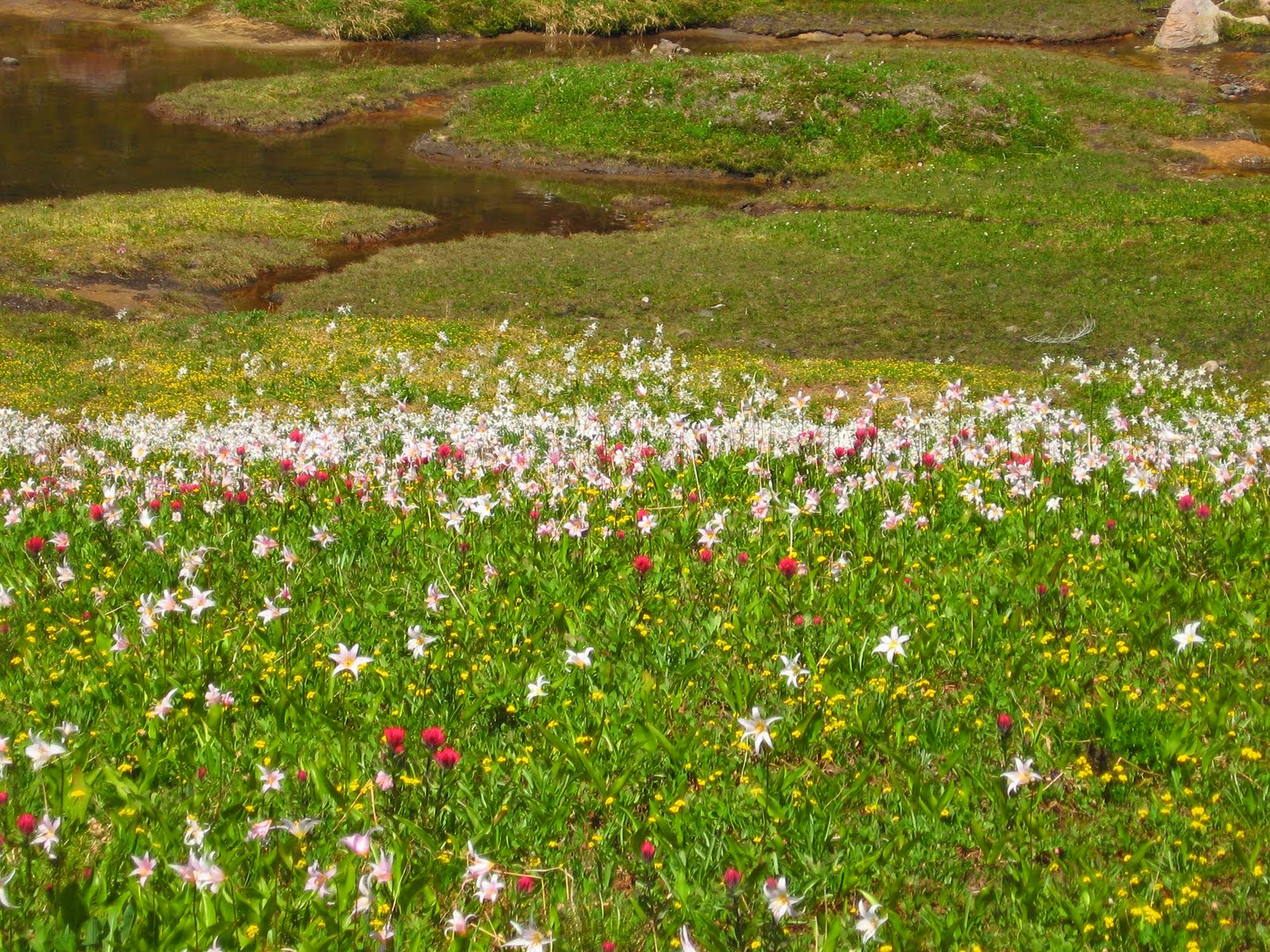 Lots of white, magenta and yellow wildflowers in a green meadow