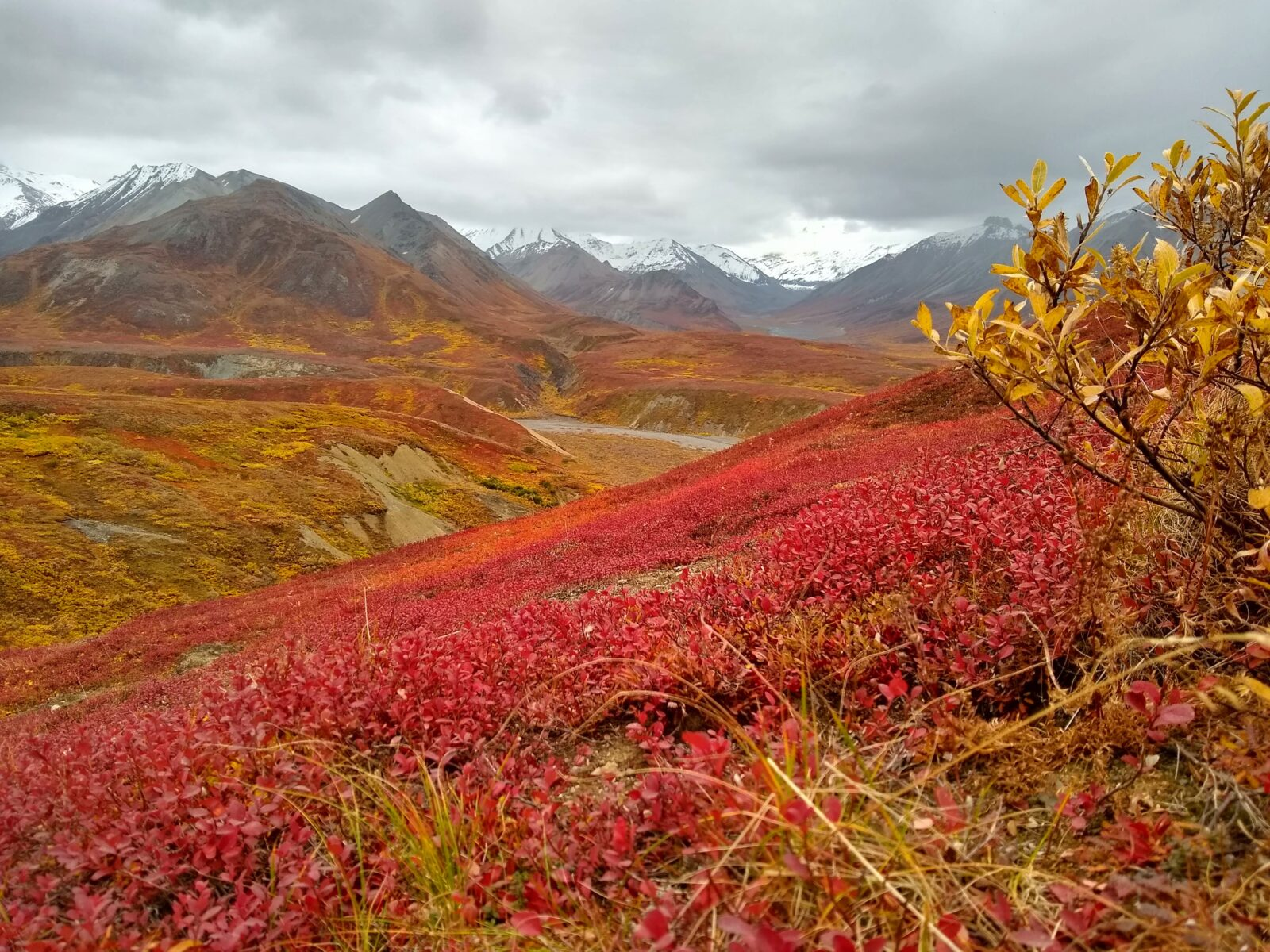 Distant snow capped mountains on a cloudy day, brilliant fall tundra colors in the foreground in Denali National Park.