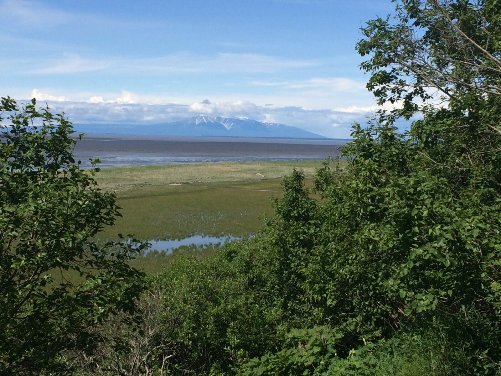 One of the best things to do in Anchorage is walk or bike the coastal trail which goes along the water and tideflats in Anchorage. Distant mountains and clouds can be seen across the water. Trees and bushes are in the foreground