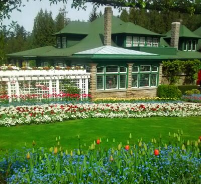 A historic home in a formal garden. The home in Butchart Gardens is the best place to have afternoon tea in Victoria. The home is brick with green trim and a green roof. There is a white lattice with flowers and a lawn surrounded by many colors of flowers