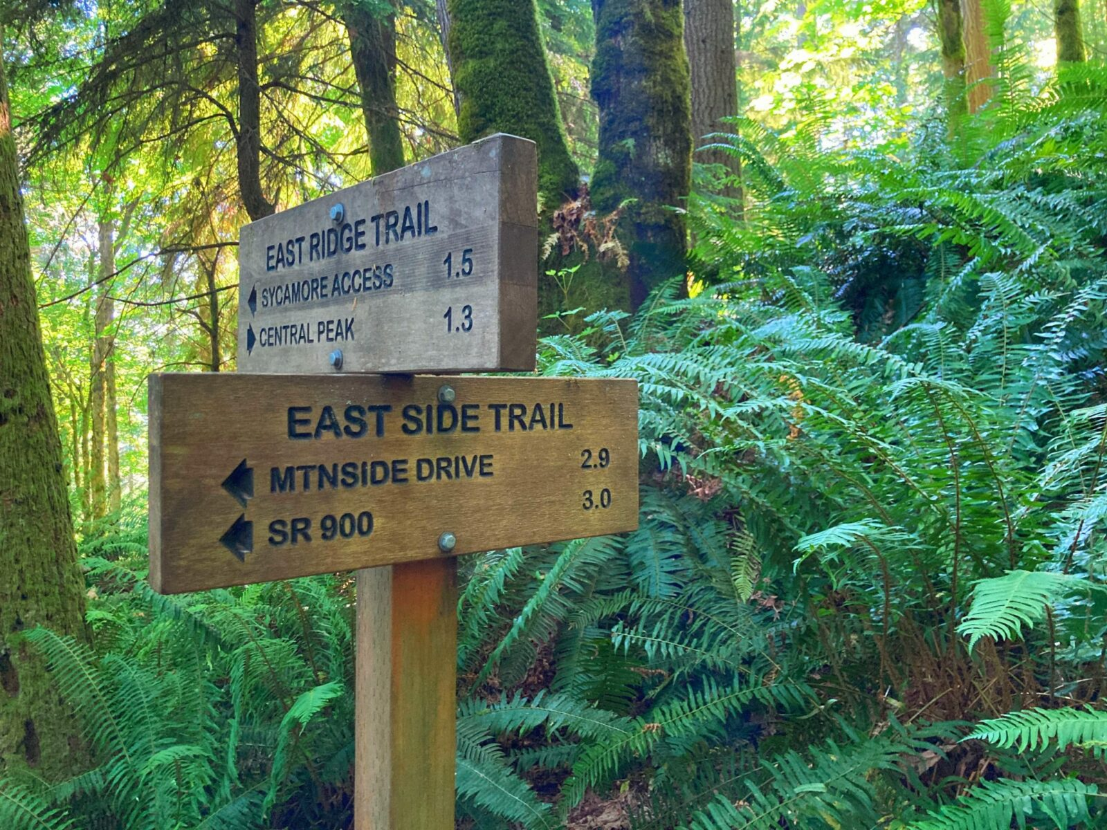 Two wooden direction trail signs on the East Ridge Trail in a forest full of ferns. One sign points to the Sycamore Access Trail and Central Peak, the other points to Mountainside Drive and SR 900