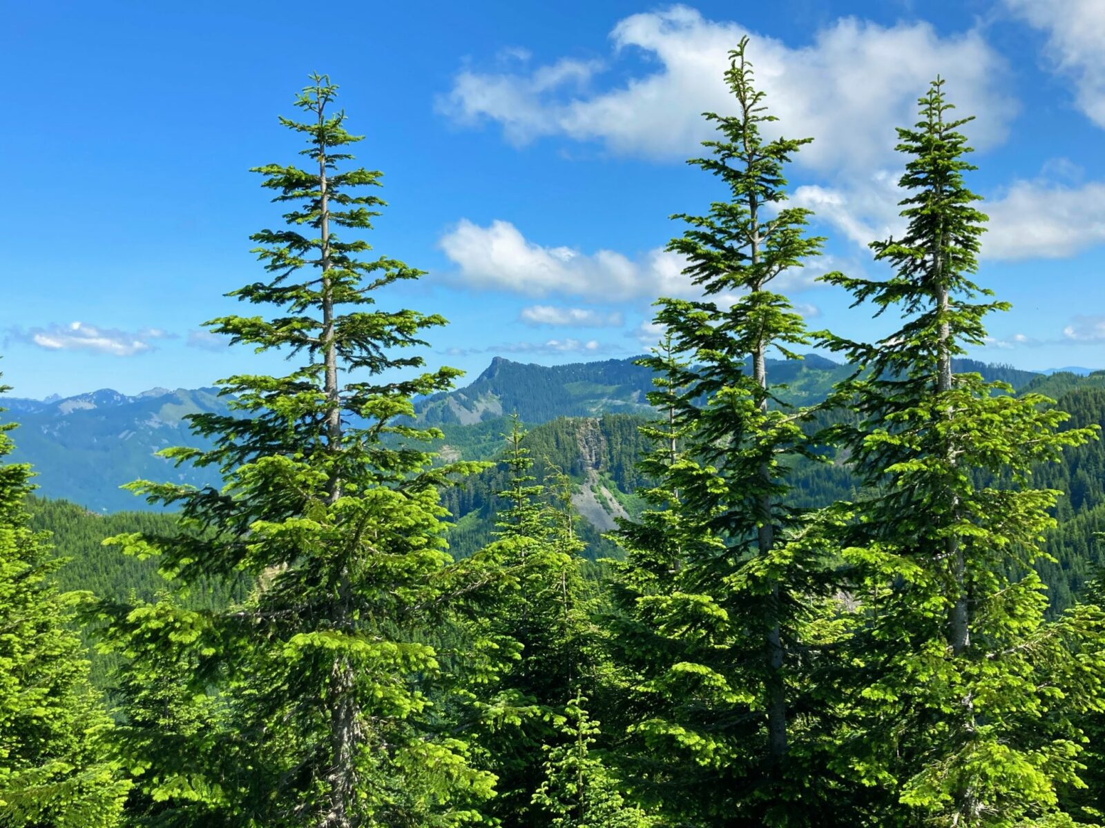 A distant mountain in the background and evergreen trees in the foreground from the summit of Mt Washington near Seattle