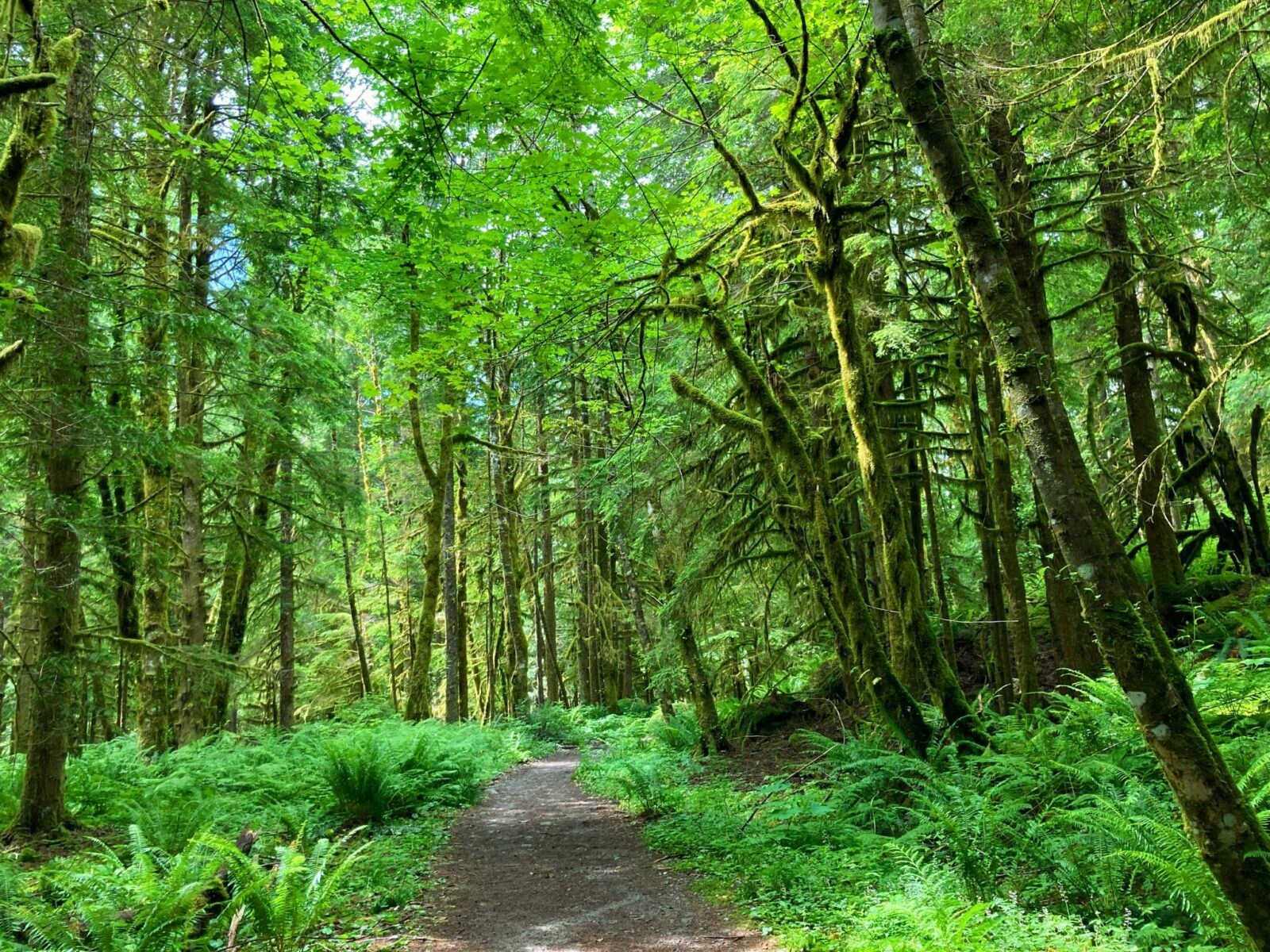 The Snoqualmie Lake trail to Otter Falls is mostly wide and flat. The trail passes through a green forest with ferns in the undergrowth