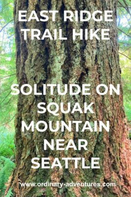 A close up of an old growth douglas fir tree. Text reads: East Ridge Trail hike, solitude on Squak Mountain near Seattle