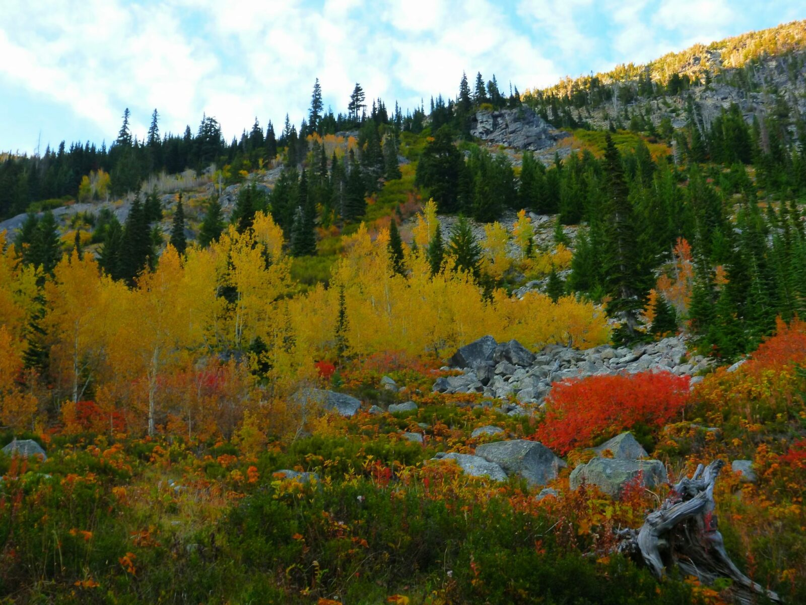 Red, yellow and orange bushes and trees in fall along the open and rocky section of the Lake Stuart trail