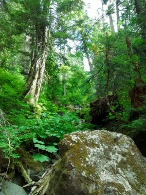 Green trees and undergrowth surround boulders along the Lodge Lake trail.