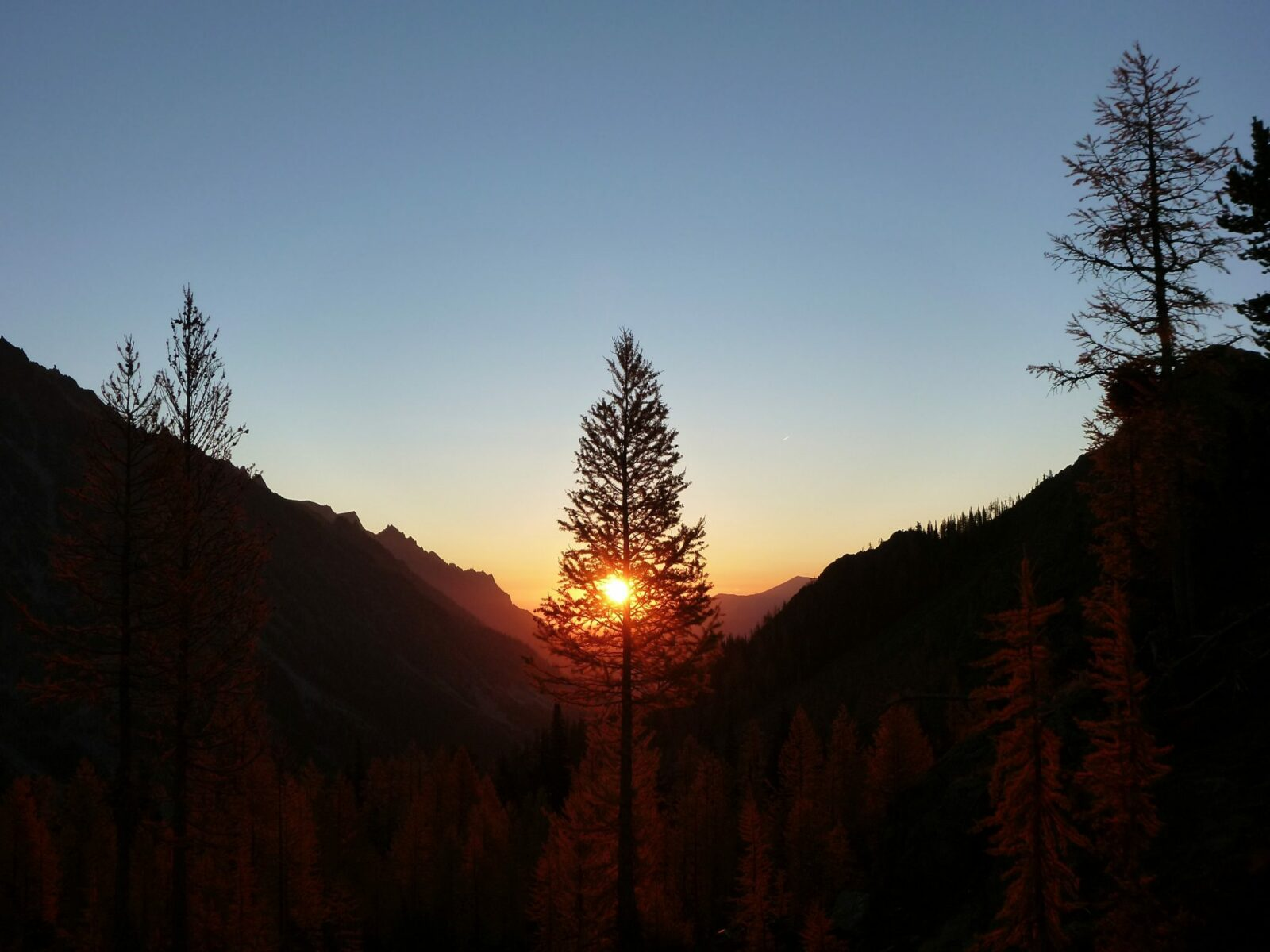 The sun rises behind a larch tree across a valley in headlight basin along the Lake Ingalls trail