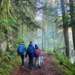 Three hikers and a dog on a winter hike near seattle. They are on a wide trail and are entering a foggy, mossy and green forest