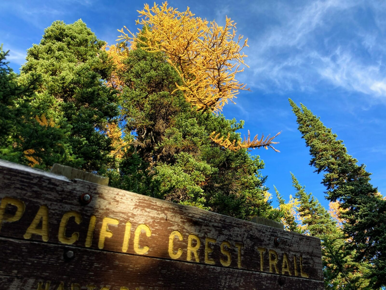 A weathered Pacific Crest Trail sign in the foreground against dark green evergreen trees and a golden larch tree against a blue sky