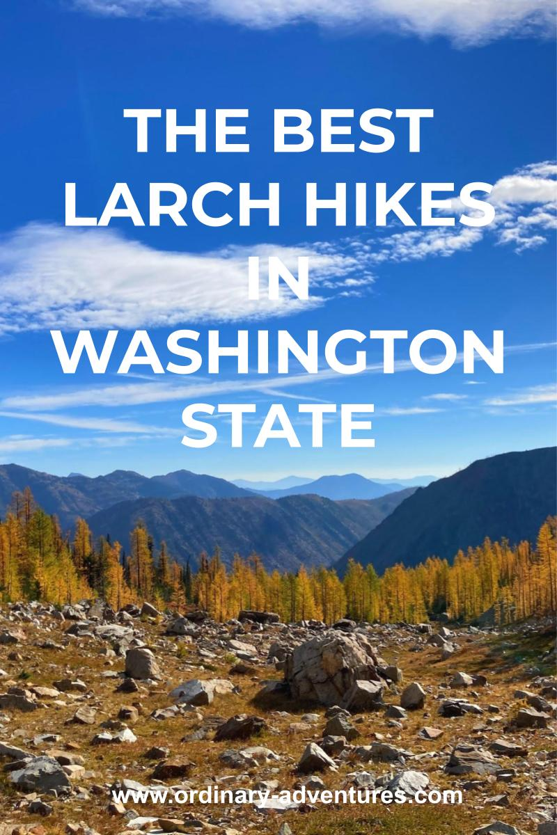 Distant mountains with golden larch trees in the foreground along a rocky trail. Text reads: The best larch hikes in washington state