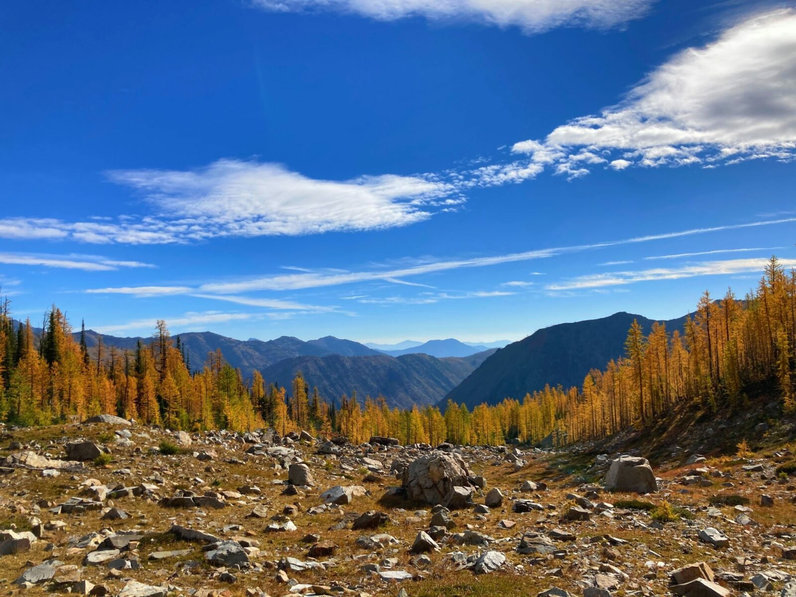 Golden larch trees with distant mountains and blue skies with some clouds in the background along the Pacific Crest trail, one of the best larch hikes in washington