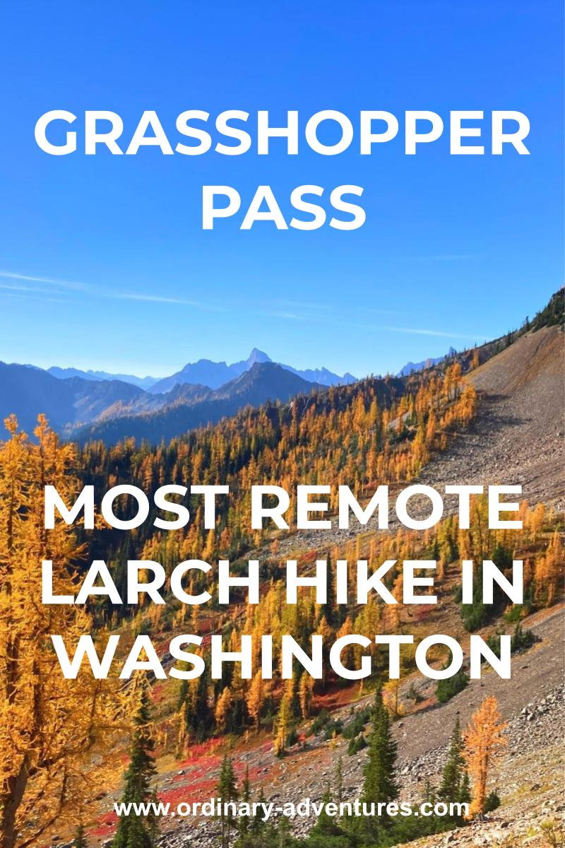 distant mountains and golden trees. Text reads: Grasshopper Pass most remote larch hike in Washington