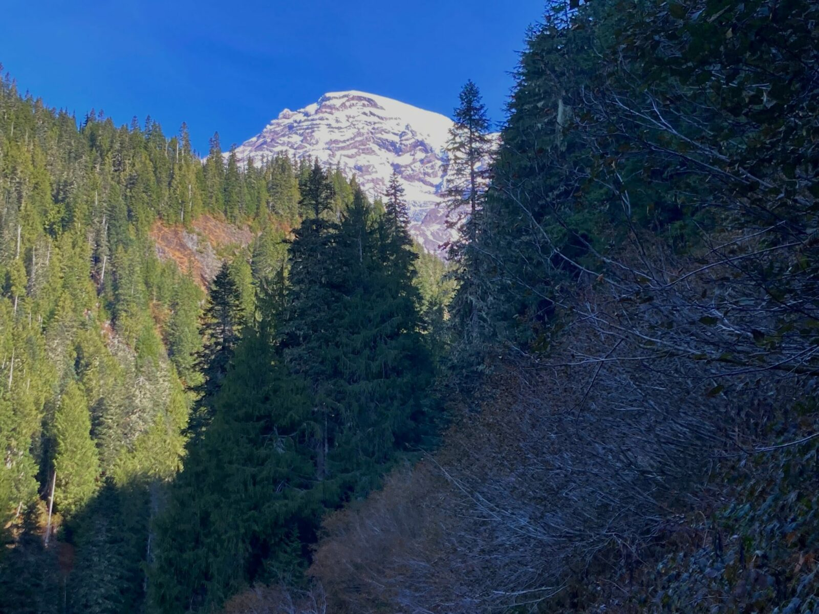 Mt Rainier is snow covered and visible in the distance in the sun. The foreground is a trail through bushes and forest in the shade