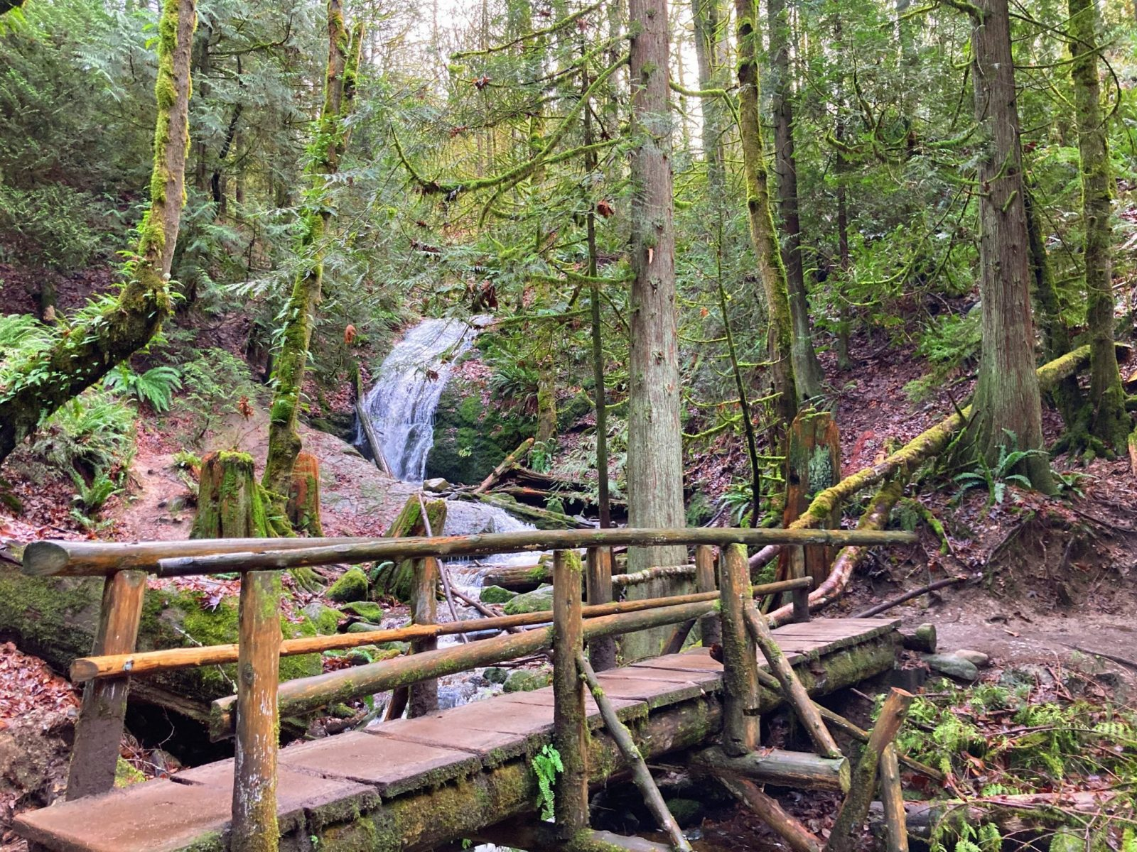 A Coal Creek Falls comes over a mossy rock face in the forest. In the foreground, a log pedestrian bridge crosses the creek below the waterfall