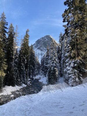 A rocky mountain with fresh snow in the distance beyond a creek. The creek is not frozen but is flowing between snow covered banks and evergreen trees