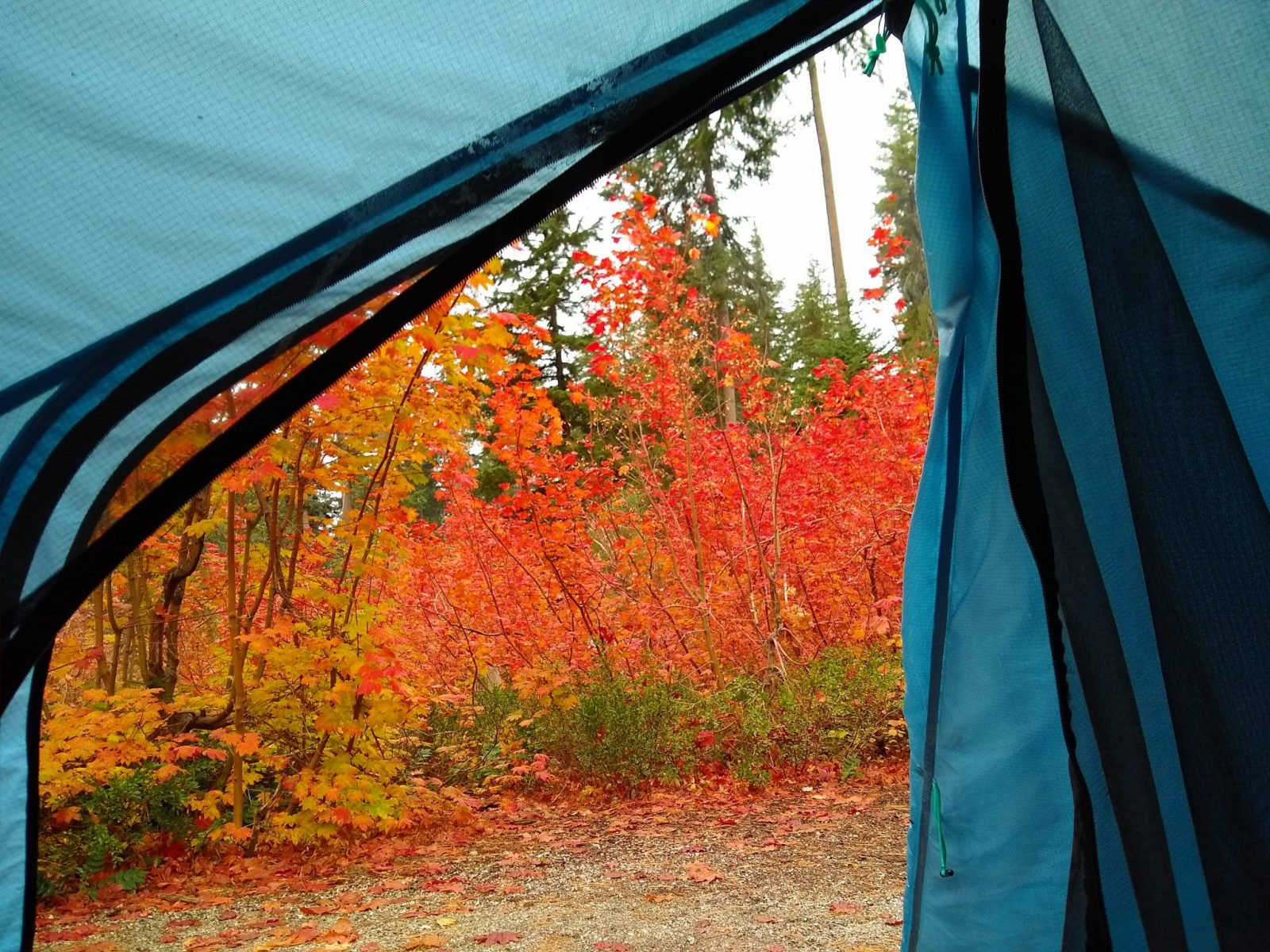 A view through the open door of a blue tent in the Lake wenatchee campground. There are green trees and bright orange and red vine maples outside the door.
