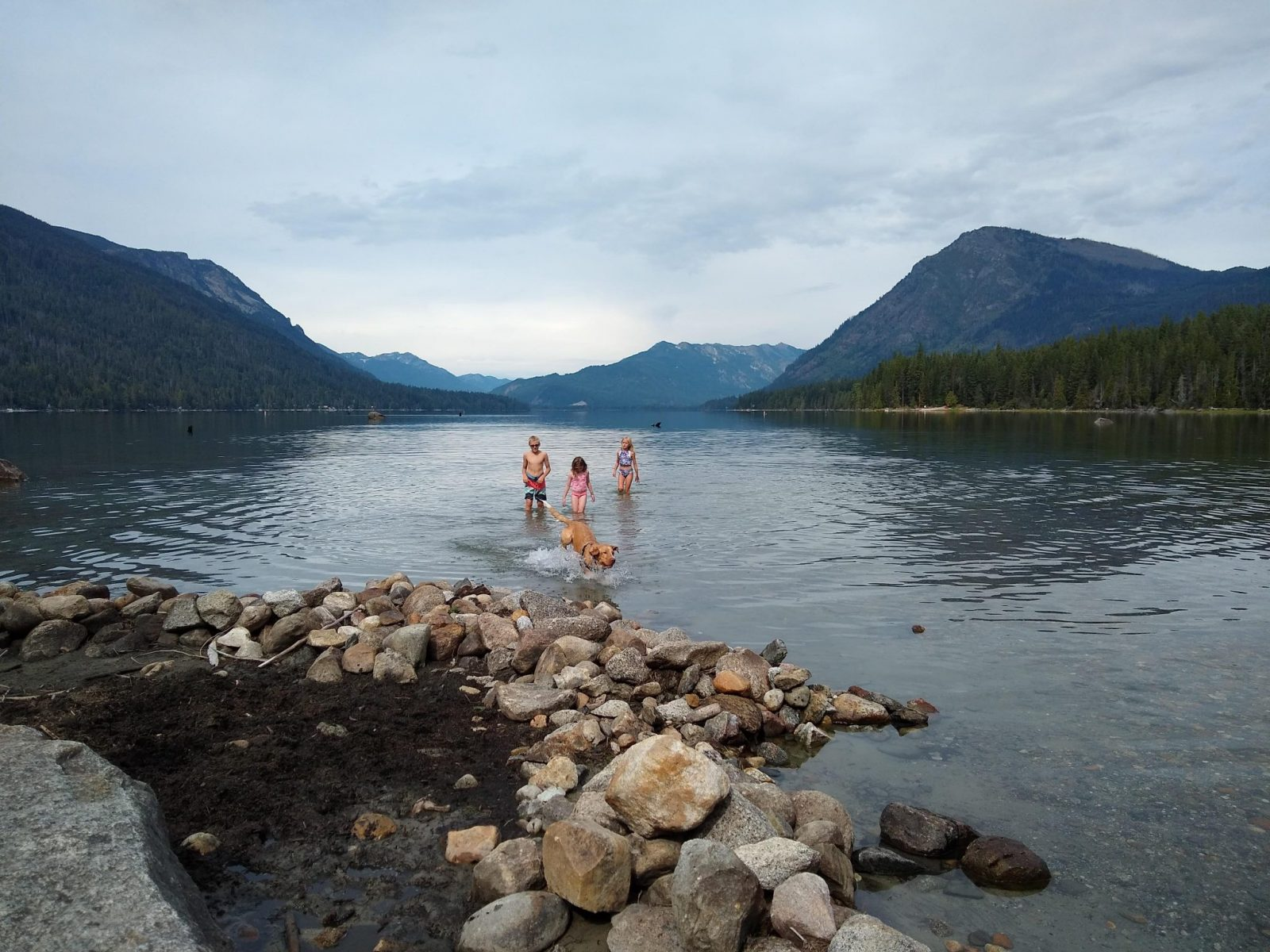 Three kinds and a dog playing in the water at the rocky shore of lake wenatchee on an overcast day. Across the large lake there are forested hillsides and mountains