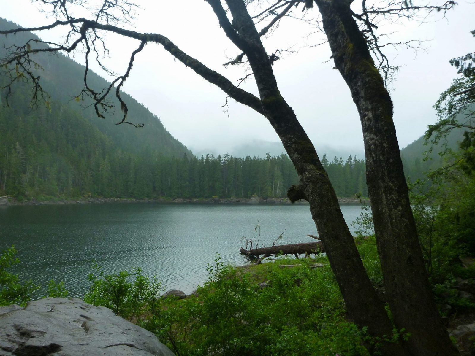 Lena Lake, An alpine lake on a foggy day, is surrounded by evergreen trees. In the foreground is a boulder, green bushes and a tree.