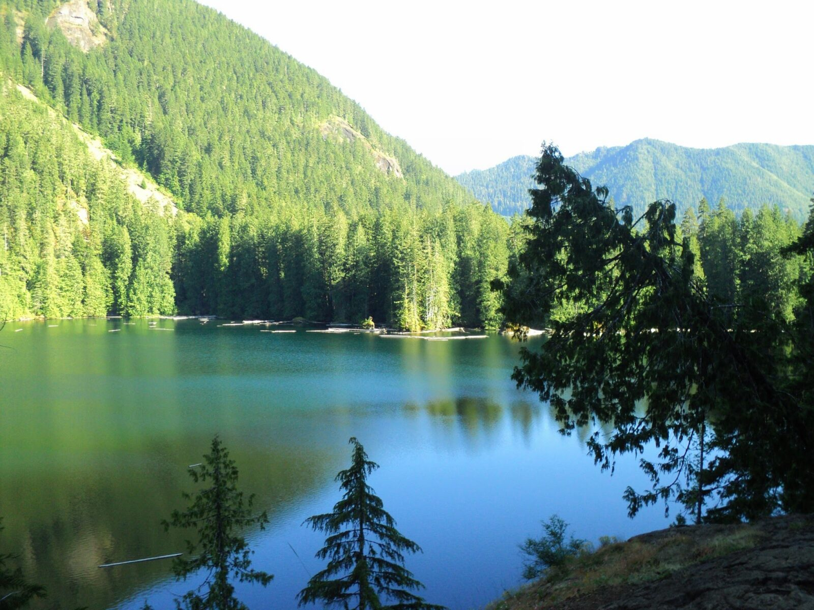 A calm alpine lake on a sunny day surrounded by evergreen trees.